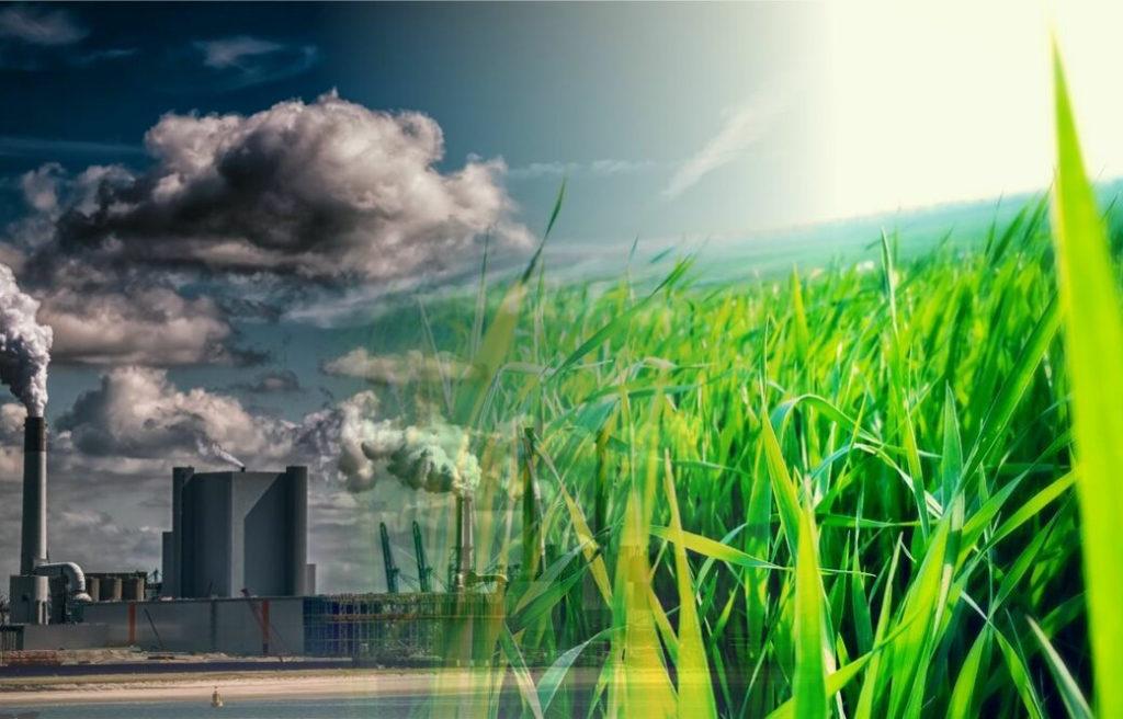 Обучение в области охраны окружающей среды